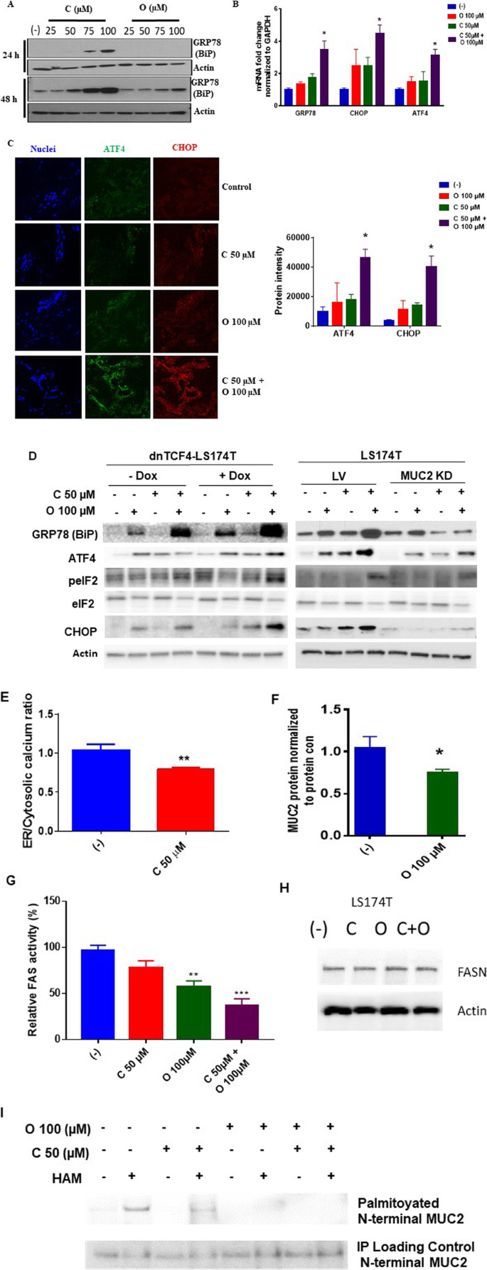 Synergistic Apoptosis Following Endoplasmic Reticulum Stress Aggravation In Mucinous Colon Cancer Orphanet Journal Of Rare Diseases Full Text