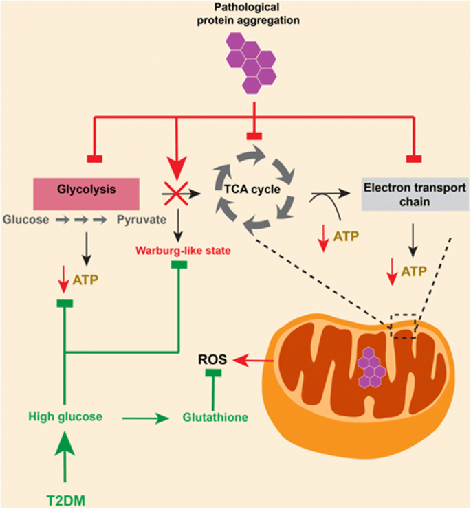 Disease-modifying effects of metabolic perturbations in ALS