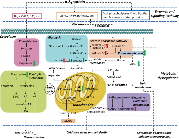 Recent advances and perspectives of metabolomics-based