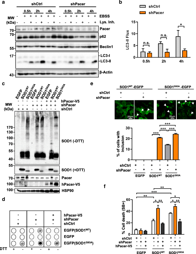 Network approach identifies Pacer as an autophagy protein