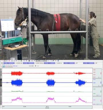 Proceedings of the 9th international symposium on veterinary