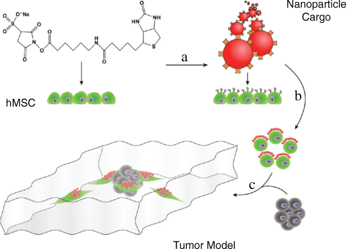 Coatings on mammalian cells: interfacing cells with their