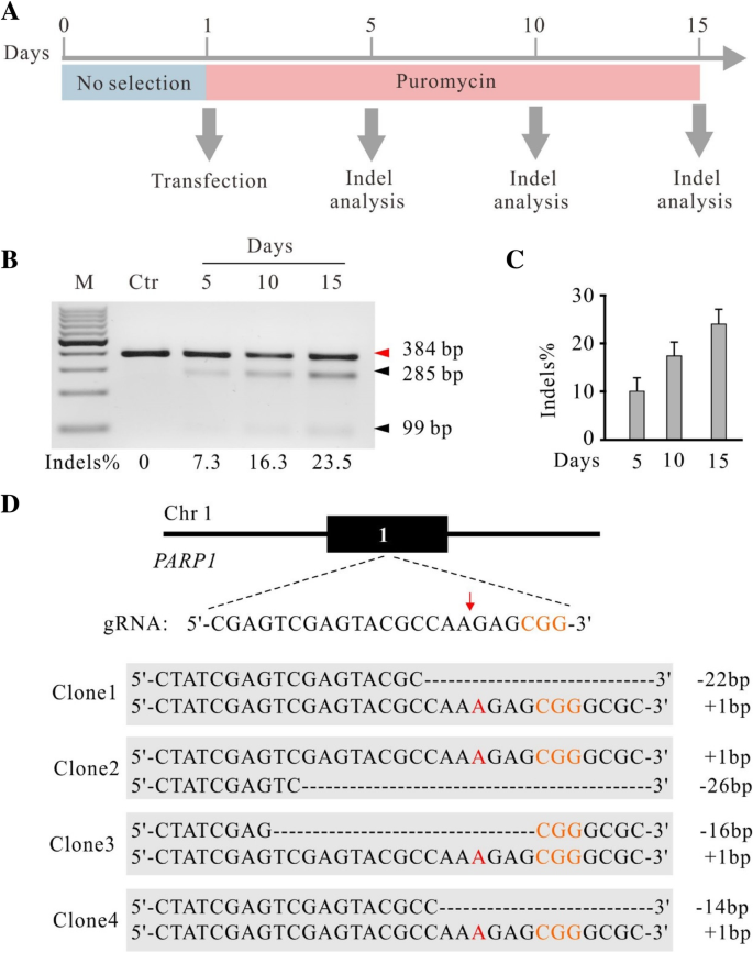 krCRISPR: an easy and efficient strategy for generating