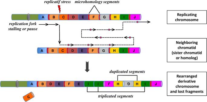 Chromoanagenesis: cataclysms behind complex chromosomal
