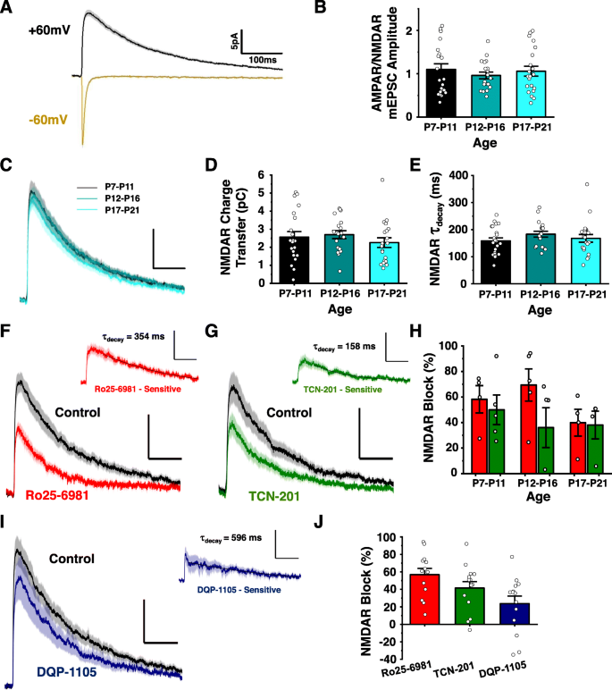 Conserved Contributions Of Nmda Receptor Subtypes To Synaptic