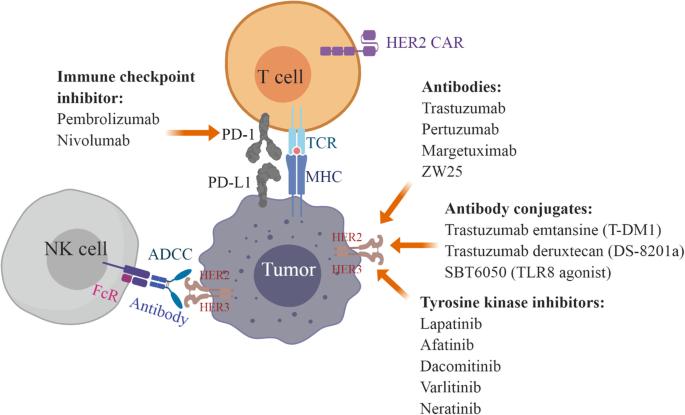 gastric cancer herceptin)