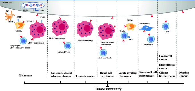 Vista An Immune Regulatory Protein Checking Tumor And Immune Cells In Cancer Immunotherapy Journal Of Hematology Oncology Full Text