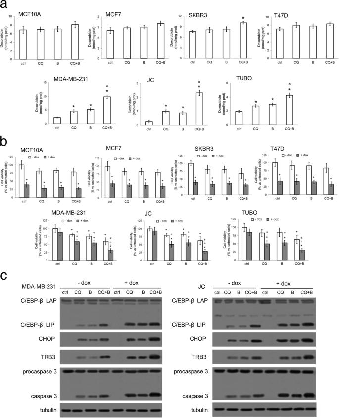 Increasing intratumor C/EBP-β LIP and nitric oxide levels