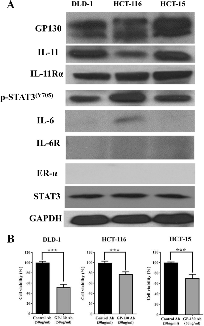 Bazedoxifene As A Novel Gp130 Inhibitor For Colon Cancer Therapy Springerlink