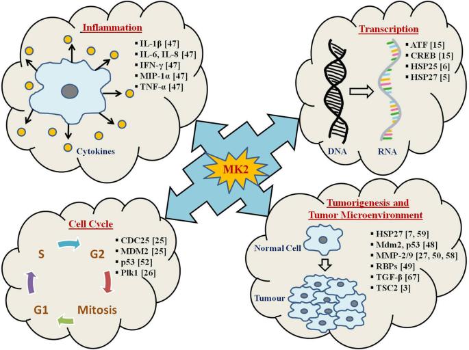 MAPKAPK2: the master regulator of RNA-binding proteins