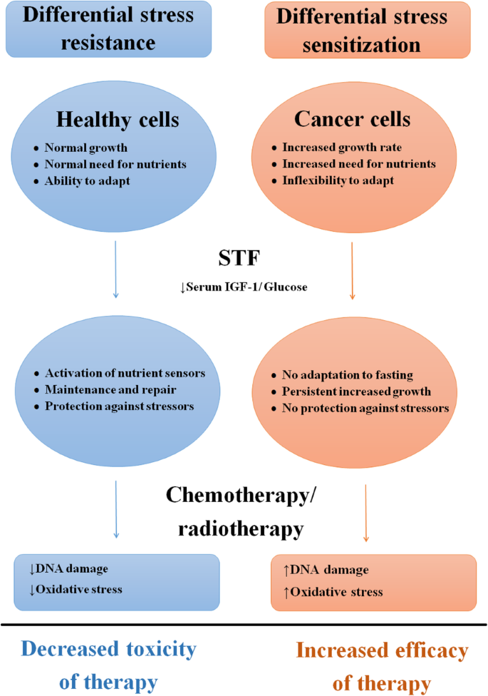 Effects Of Short Term Fasting On Cancer Treatment Journal Of Experimental Clinical Cancer Research Full Text