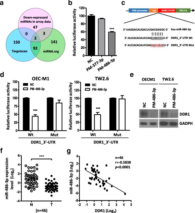 MicroRNA-486-3p functions as a tumor suppressor in oral