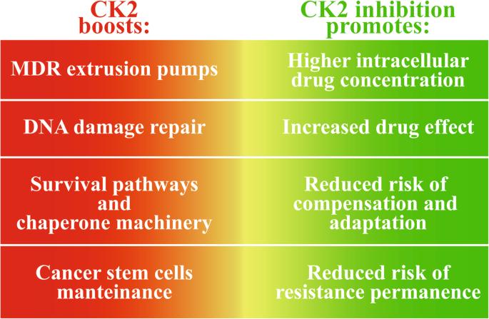 Role of protein kinase CK2 in antitumor drug resistance | Journal of
