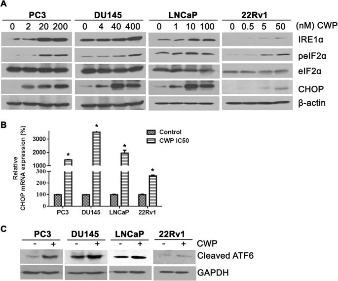 The small molecule WNT/β-catenin inhibitor CWP232291 blocks the