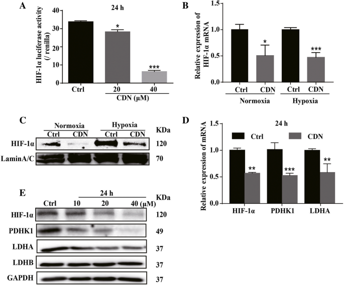 Cardamonin inhibits breast cancer growth by repressing HIF
