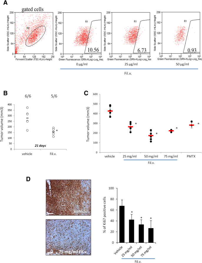 Dropwort-induced metabolic reprogramming restrains YAP/TAZ/TEAD