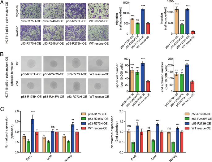 P53 R273h Mutation Enhances Colorectal Cancer Stemness Through Regulating Specific Lncrnas Journal Of Experimental Clinical Cancer Research Full Text