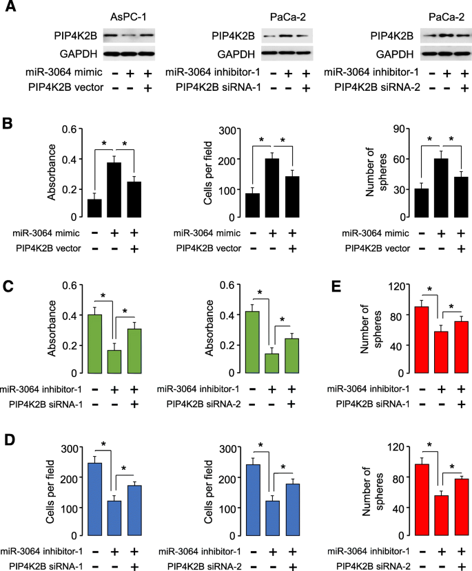 Long non-coding RNA PXN-AS1 suppresses pancreatic cancer