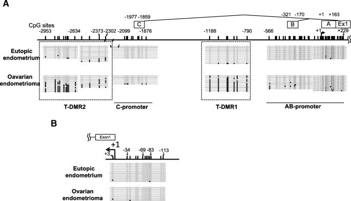 Aberrant DNA methylation suppresses expression of estrogen