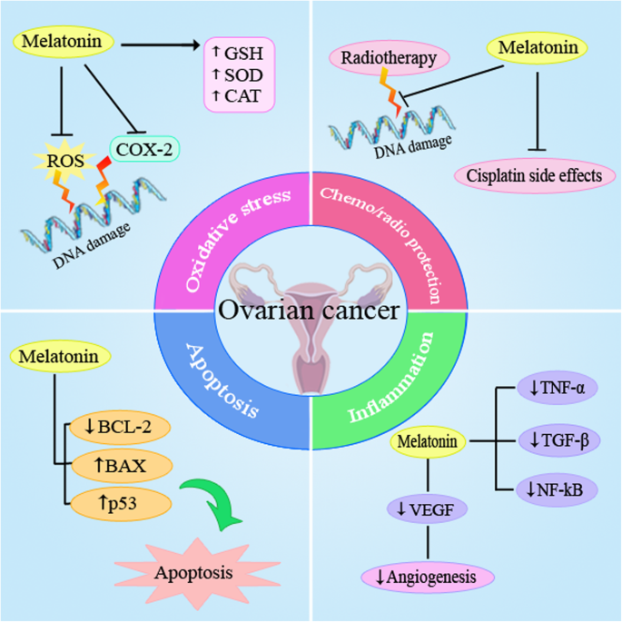 Melatonin Is A Potential Inhibitor Of Ovarian Cancer Molecular Aspects Journal Of Ovarian Research Full Text
