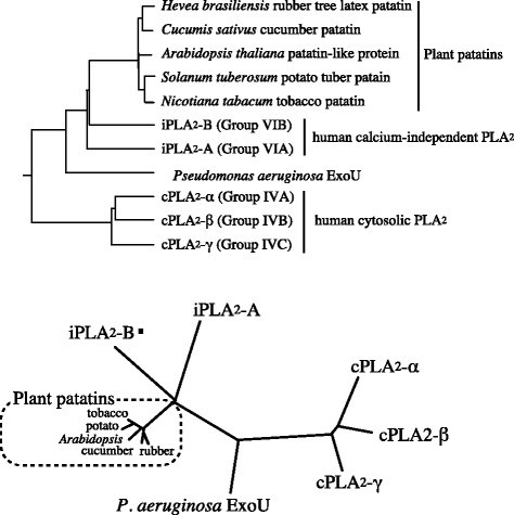 Association between Pseudomonas aeruginosa type III secretion