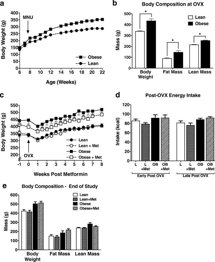 Metformin inhibits stromal aromatase expression and tumor