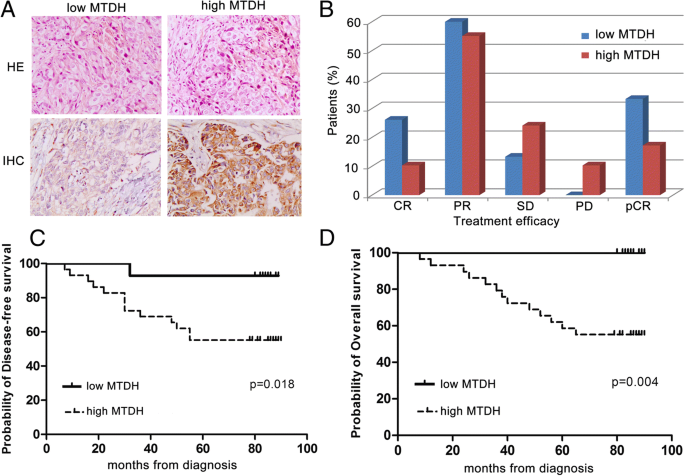 Efficient and tumor-specific knockdown of MTDH gene