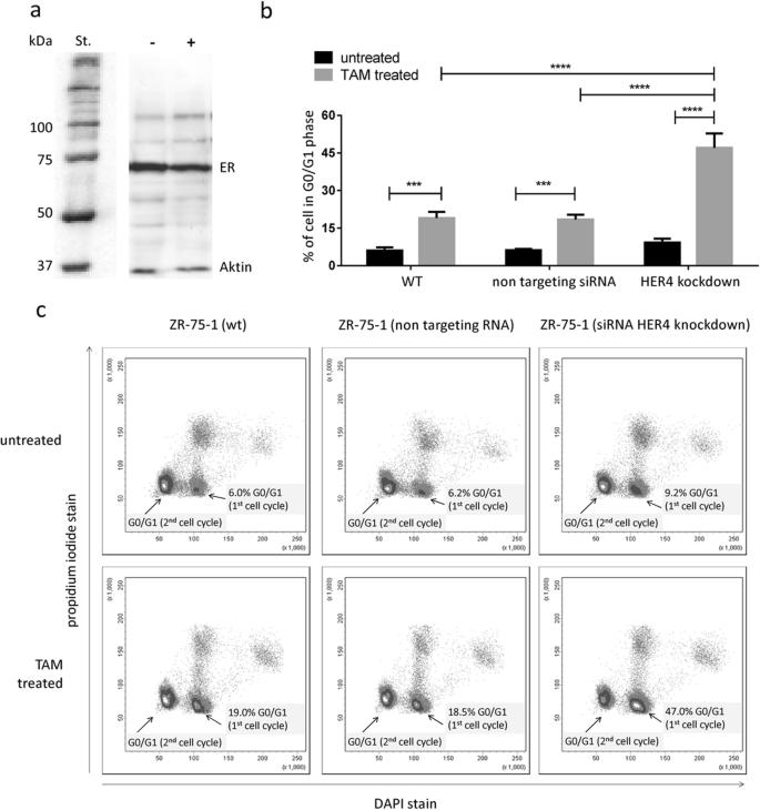 HER4 expression in estrogen receptor-positive breast cancer is