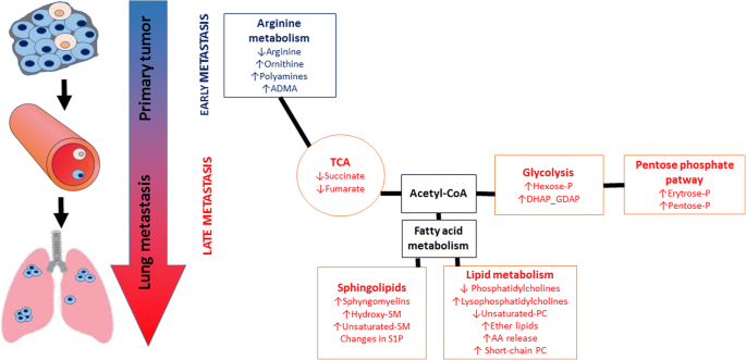 Alterations in arginine and energy metabolism, structural