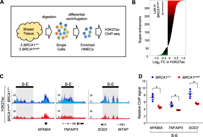 BRCA1 mutations attenuate super-enhancer function and chromatin
