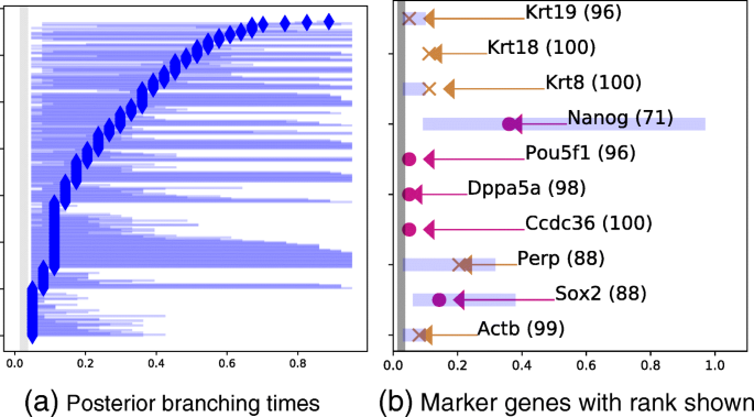 BGP: identifying gene-specific branching dynamics from single-cell