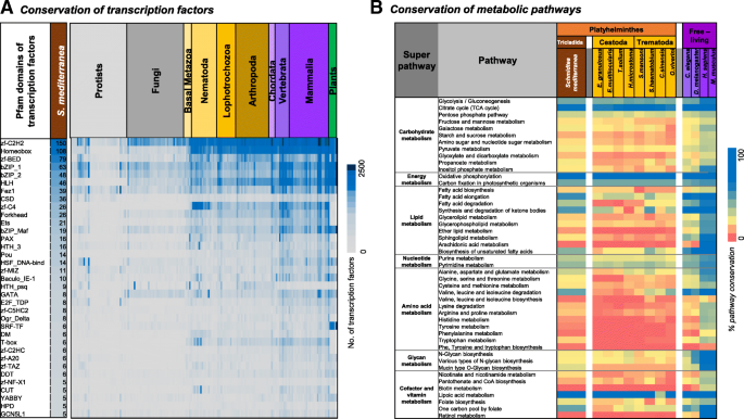 Comparative transcriptomic analyses and single-cell RNA