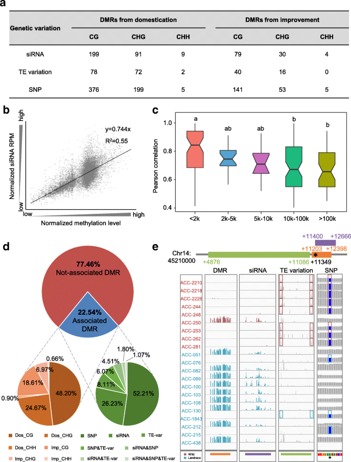 DNA methylation footprints during soybean domestication and