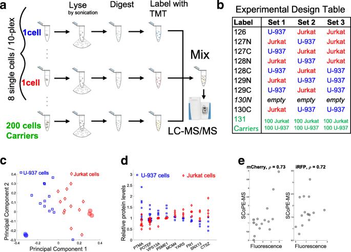 SCoPE-MS: mass spectrometry of single mammalian cells quantifies