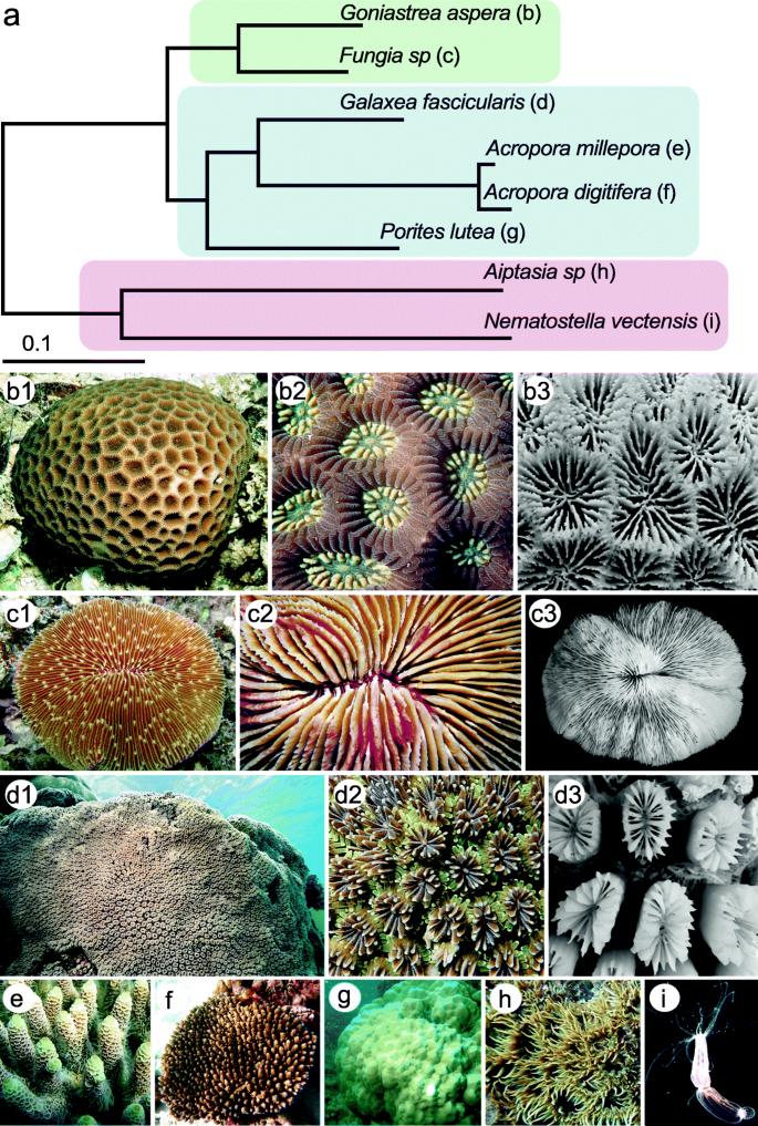 Comparative genomics reveals the distinct evolutionary trajectories