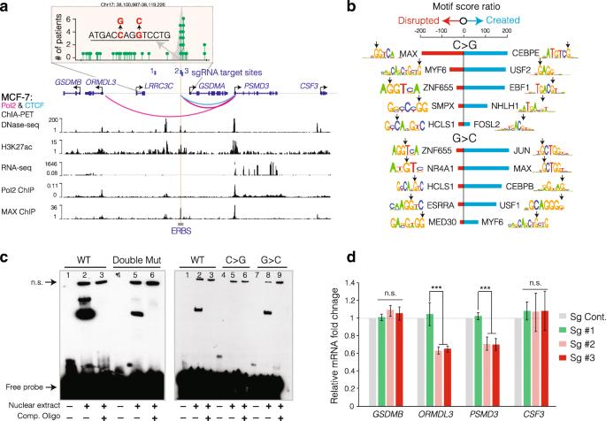 Recurrent mutations at estrogen receptor binding sites alter