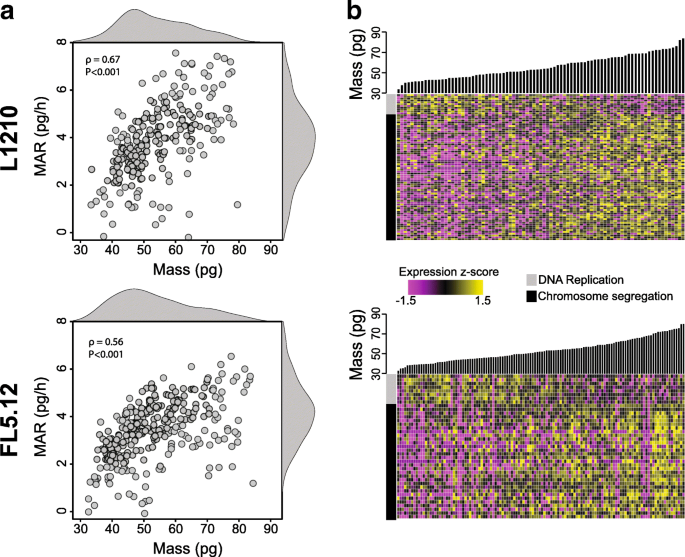 Linking single-cell measurements of mass, growth rate, and