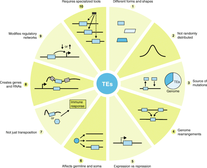 Ten things you should know about transposable elements | Genome