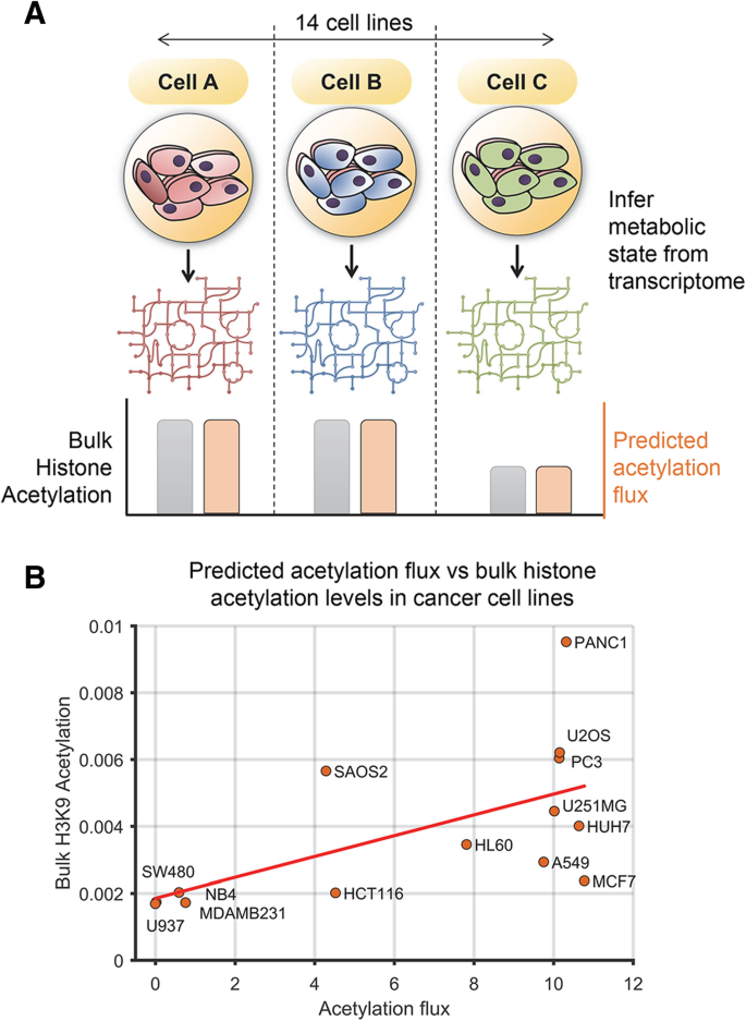 Genome-scale network model of metabolism and histone acetylation