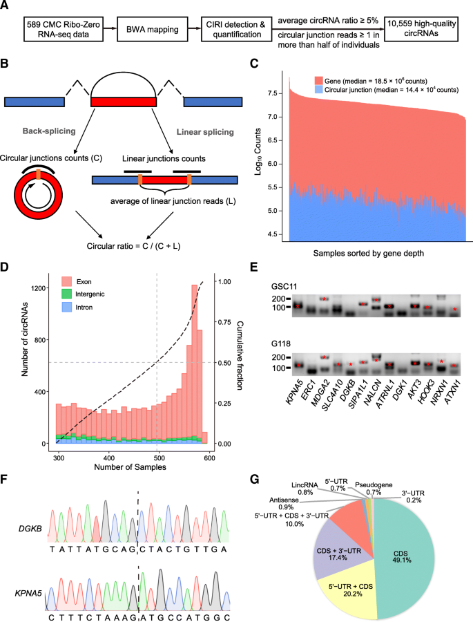 Detection of circular RNA expression and related quantitative trait