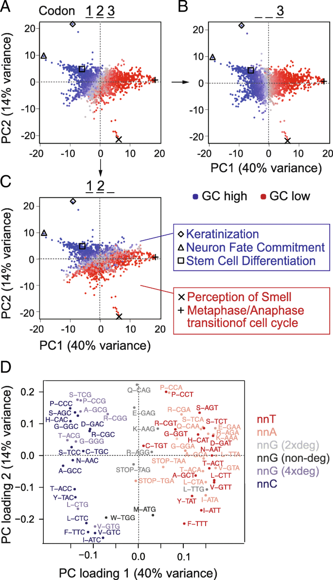 Codon Usage Optimization In Pluripotent Embryonic Stem Cells Genome Biology Full Text