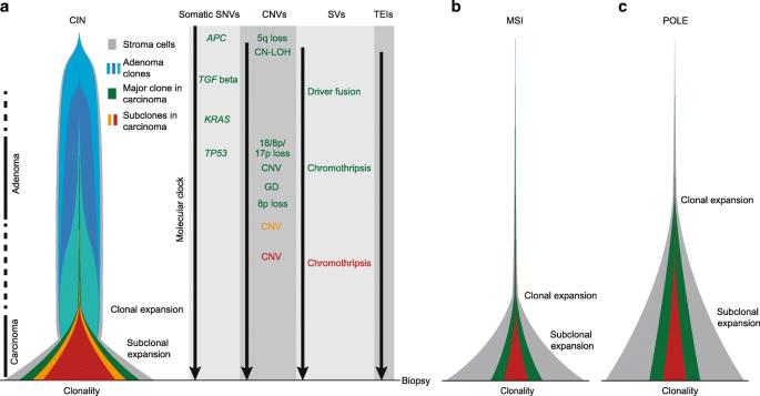 An enhanced genetic model of colorectal cancer progression