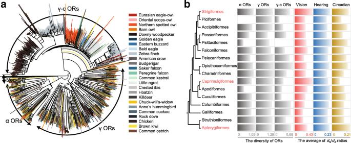 Raptor genomes reveal evolutionary signatures of predatory