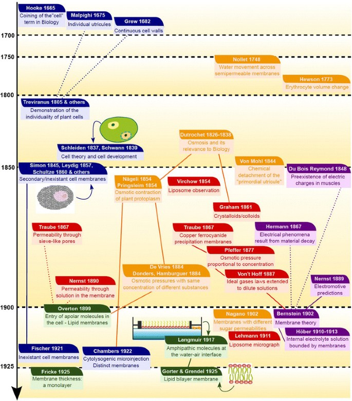 Once upon a time the cell membranes: 175 years of cell boundary