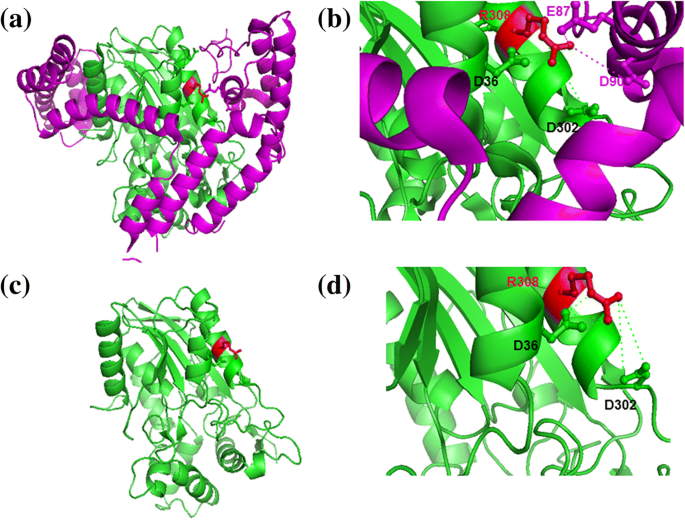 Interface residues of transient protein-protein complexes