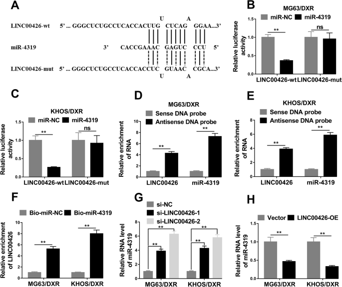 Long Non-coding RNA LINC00426 Contributes To Doxorubicin