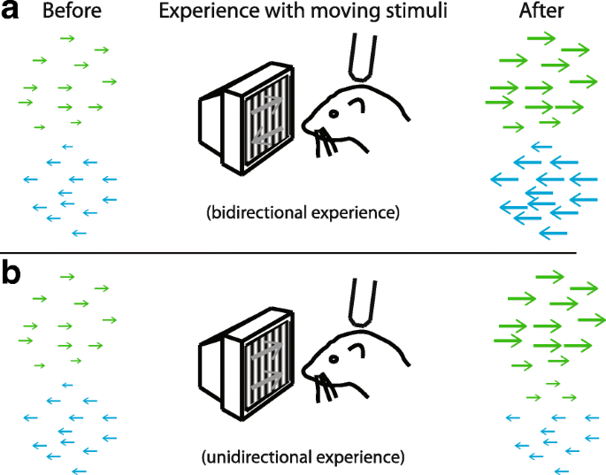 Does experience provide a permissive or instructive