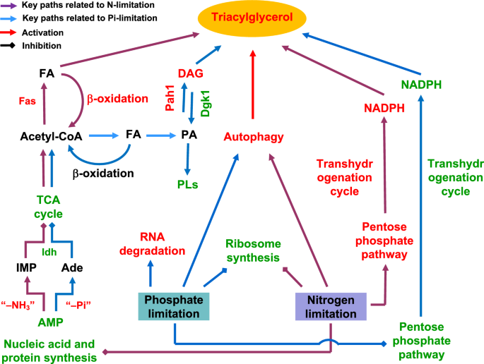 Systems analysis of phosphate-limitation-induced lipid