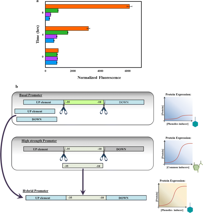 Hybrid phenolic-inducible promoters towards construction of self