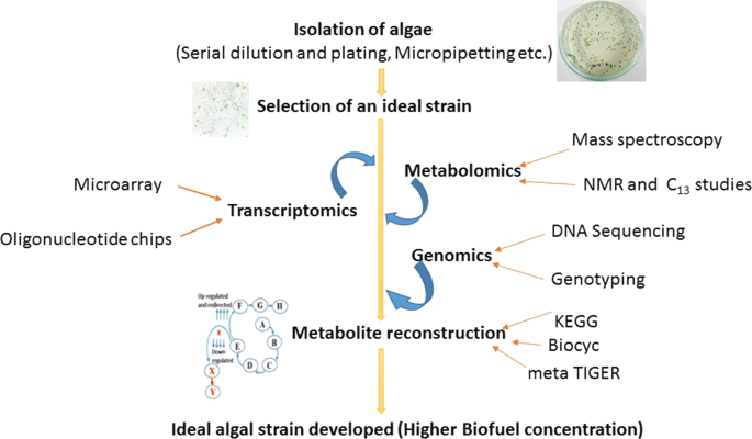 Recent developments in synthetic biology and metabolic engineering